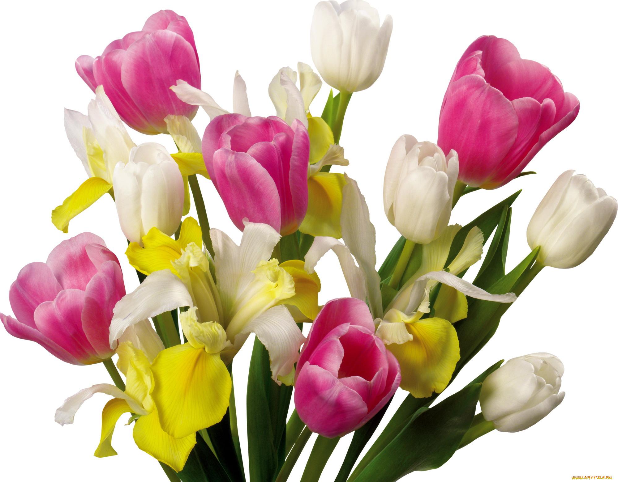 шаблон букет тюльпанов анимация фото всего поражаются